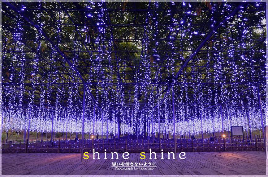 shine 01.jpg